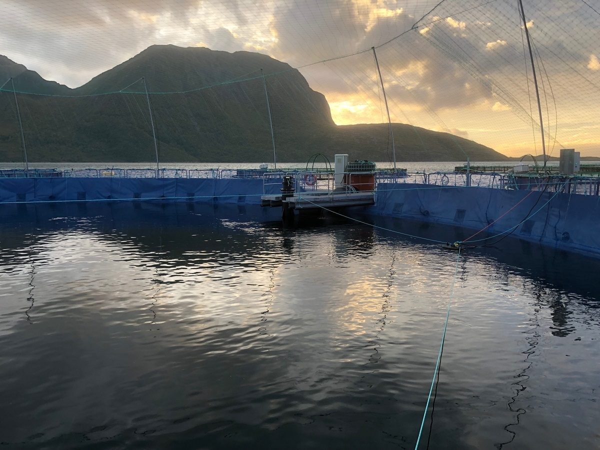 Salmon thriving in new closed containment system: Cermaq - https