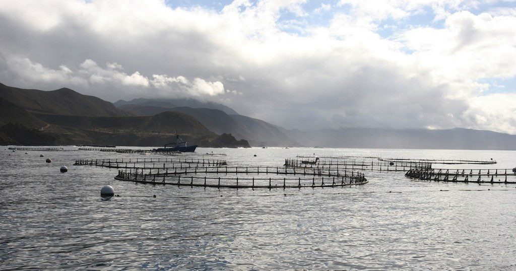 Mexico welcomes international companies for offshore aquaculture