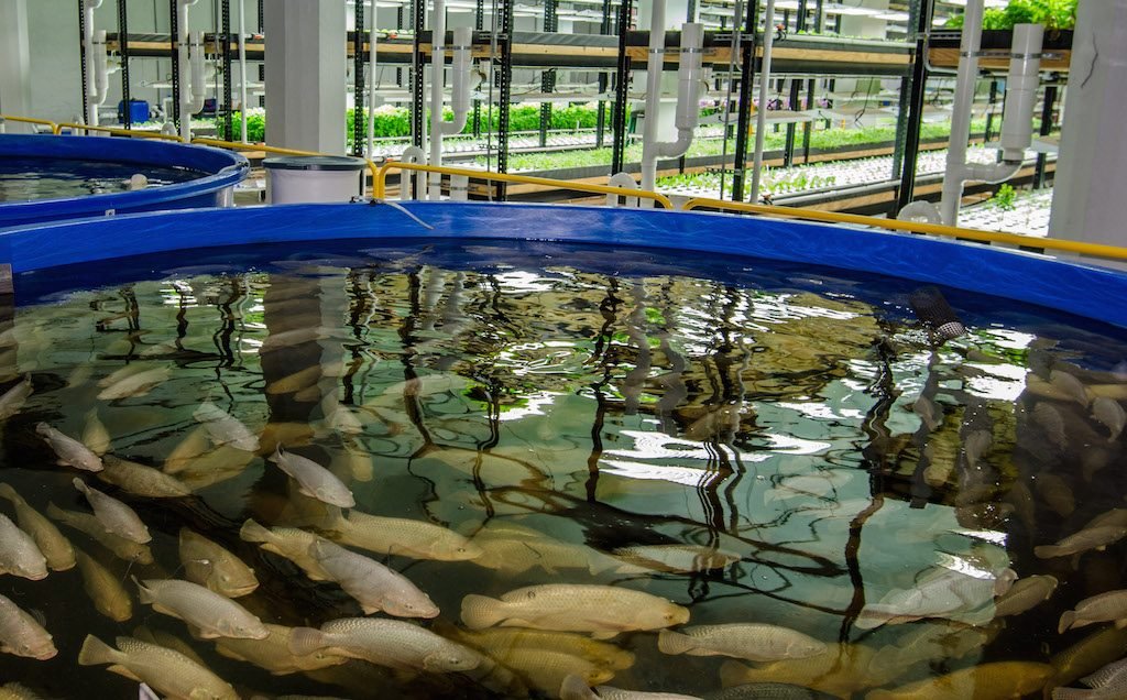 Aquaponics project takes root in Minnesota - https://www