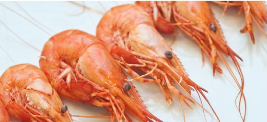 New shrimp water treatment systems to speed up production