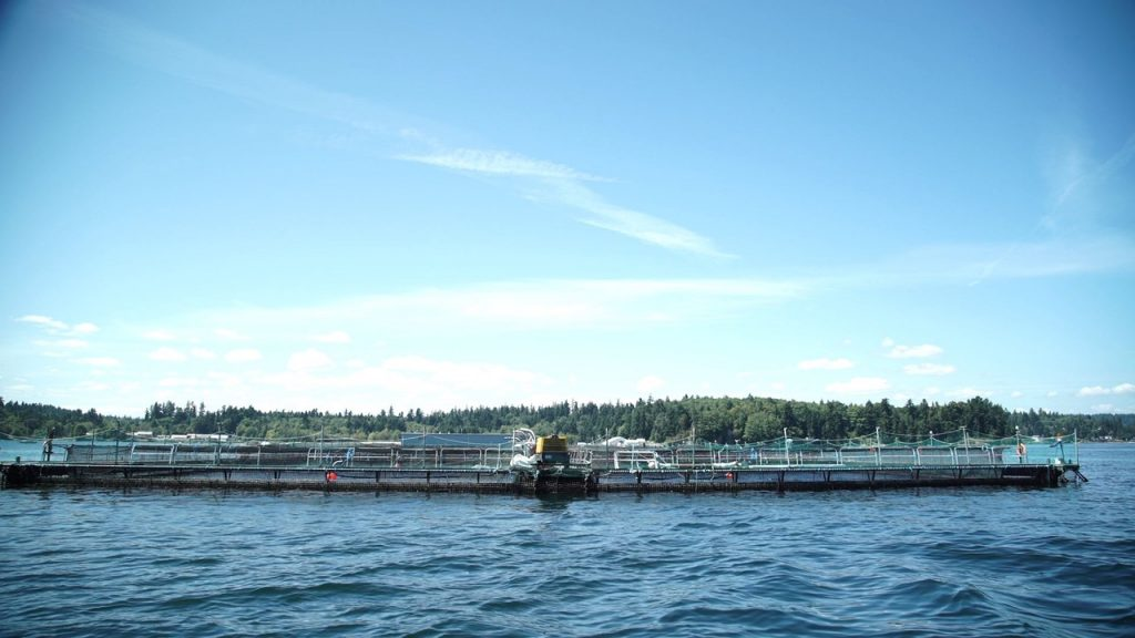 Cooke's Clam Bay, WA site. If proposal is approved, it will be Cooke's first time to farm steelhead. (Photo: Cooke Aquaculture)