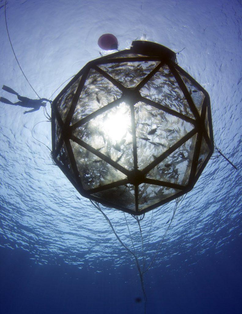 Offshore aquaculture Velella net pen (Credit: InnovaSea)