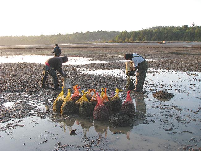 Review of permit leaves Washington shellfish farmers on tenterhooks - Aquaculture North America